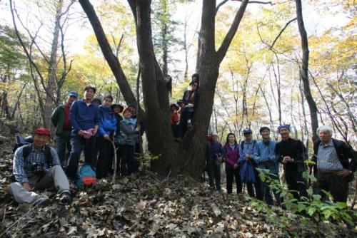 'Uiryong People', nature conservationists from Friends of Nature - Korea, in front of a giant acer in Chungbong Valley